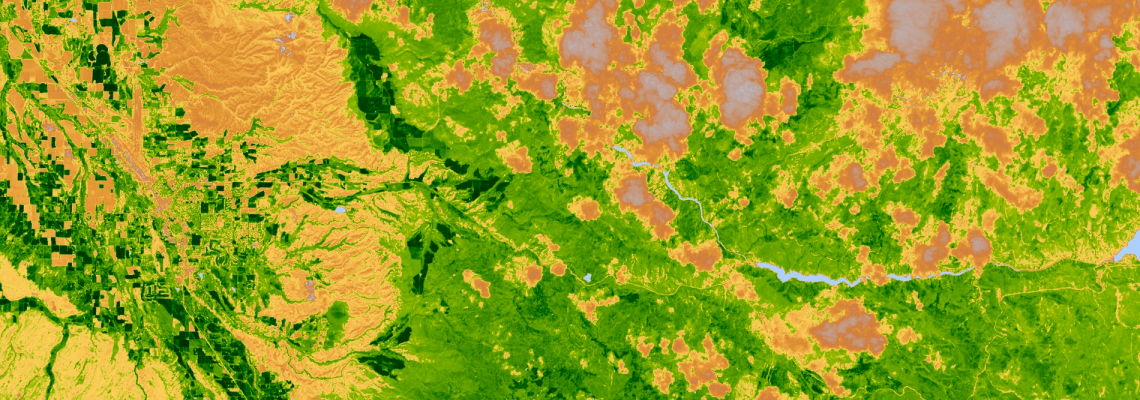 Satellite image of vegetation cover